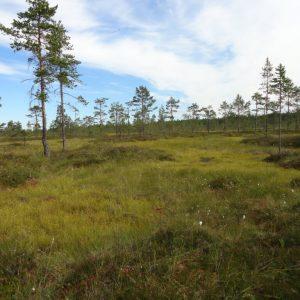 Lähiympäristö tutuksi Geopark-luontoretkillä